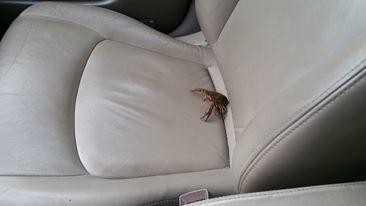 winston-in-car