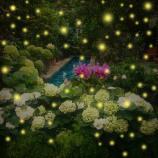 DC Garden_Fireflies1